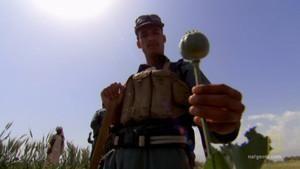 The Taliban's Poppy photo