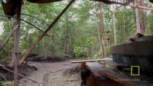 Swamp Hideout show