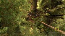 Redwood Tree show