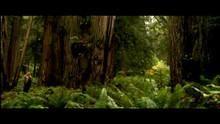 """غابات """"أحمر الخشب"""" العملاق برنامج"""