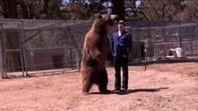 Bear Tragedy show