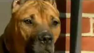 Crisis Dog photo