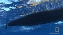 Whale CloseUp show