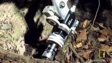 Jungle Camera show