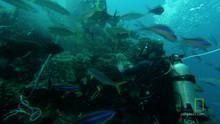 Underwater Cameras show