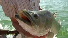 Big Fish 節目