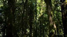 On Orang Pendek's Trail show