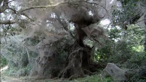 Gigantic Forest Web photo