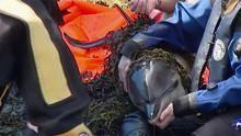 Mystery Dolphin Stranding show