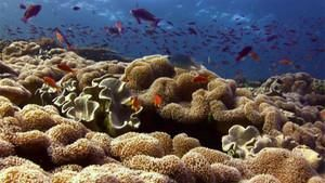 Reef Thief photo