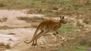 Roos in Trouble photo