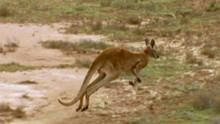 Roos in Trouble show