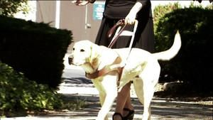 Guide Dogs photo