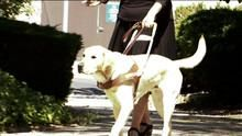 Guide Dogs show