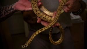 Snake Breeding and Selling photo