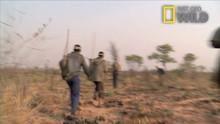 Kalahari show