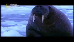 أبرد حيوانات العالم صورة