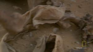 Animals Mummies photo