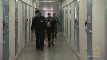 Black Dolphin Prison show
