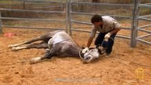 Breaking Wild Horses 節目
