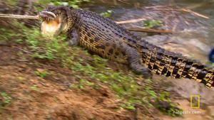 Giant Crocodile photo