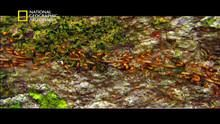 الأمازون المتوحش برنامج