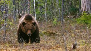 Bear Cub Protector photo