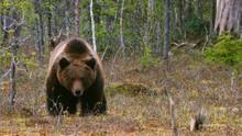 Bear Cub Protector show