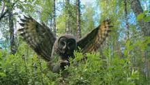 Owl Hunt show