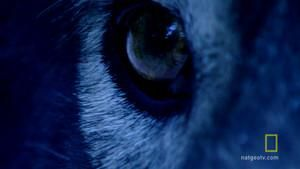 The Wolf Hunter photo