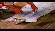 Anaconda: Queen Of The Serpents show