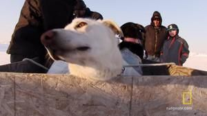 Plane Full of Sled Dogs photo