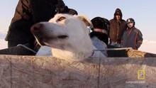 Plane Full of Sled Dogs show