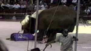 Elephant Attack photo