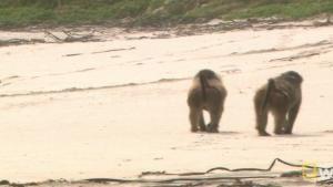 Beachside Baboons photo