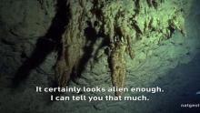 Underwater Graveyard show