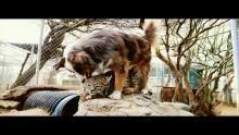 أصدقاء الحيوان غير المحتملين برنامج
