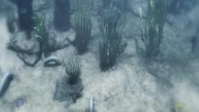 L'esplosione cambriana programma