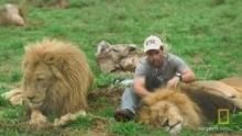 Lion and Human in Harmony show