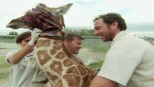 Giraffe Hug show
