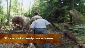 Horse Logging photo