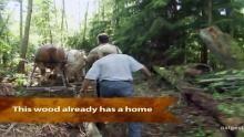 Horse Logging show