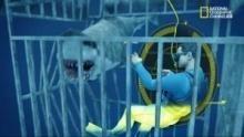 Sopravvivere agli squali programma