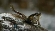 Brasile paradiso selvaggio - Indomabili fuoriclasse programma