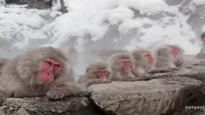 Monkey Hot Tub photo