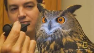 Hans the Owl photo