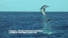 Brasile paradiso selvaggio - Palla al centro programma