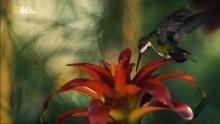 Creature della giungla programma