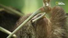 Brasile paradiso selvaggio - Amazzonia: i segreti della Foresta programma
