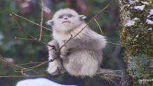 Mountain Monkeys show